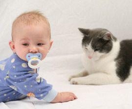 Ζώα. Γνωρίστε «αναίμακτα» το κατοικίδιο σας στο νεογέννητο μωρό