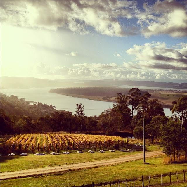 The Tamar Valley near Launceston, TAS - a beautiful place full of fantastic vineyards!