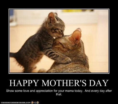 e54b5febfbf989838b3af87164d3db3a cat quotes true quotes 32 best mothers day animals ❤ images on pinterest mother's