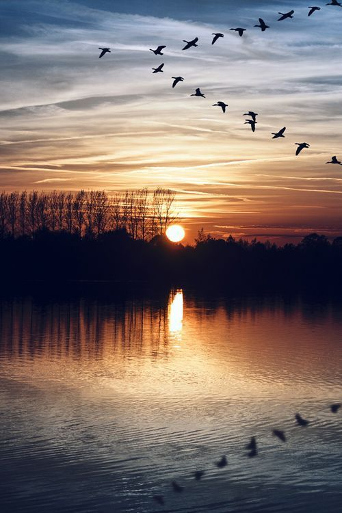 Photography images-Ducks, moon, lake, clouds, & trees-Fantastic!