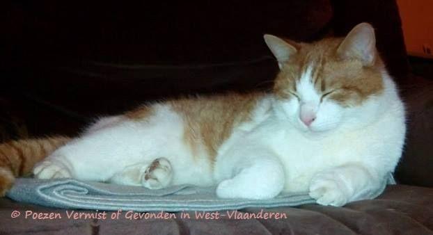 #VERMIST te #BRUGGE !!! (sinds 19-02-2014) buurt Baliestraat ( #sint-gillis ) door Veronique Ricquier: #KATER FILOU  1,1/2 jaar, gecastreerd, roste tijgertje met witte poten en onderbuik, staart is in ringen, diverse kleuren rost. Er zit soms een gelijkaardige kat in de tuin van het wit-gele kruis in de Annuntiatenstraat, maar kunnen er niet bij omdat hij/zij te schuw is. ...> U kunt mij bellen op het nummer 0499/70.71.35, thx Veronique Ricquier