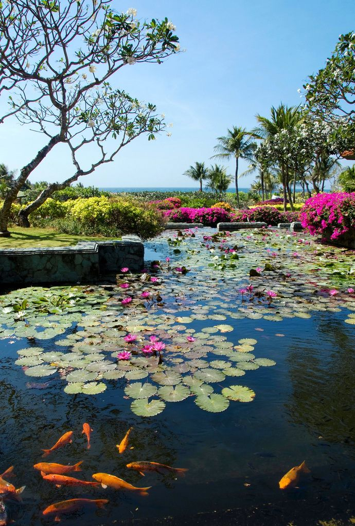 Beautiful: Water Gardens, Favorite Places, Koi Ponds, Farms Ponds, Beautiful Ponds, Beautiful Gardens, Water Lilies, Watergarden, Mothers Natural