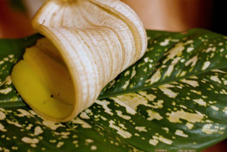 A múlt.... Sokáig én is azt hittem, hogy a banánnak csak a belsejét használjuk, esszük, kenjük... ezért a héját gondolkodás nélkül dobtam a szemetesbe!  Aztán egyik nap látom, amint a férjem a BANÁN belső héjával kezdi el törölgetni a szobanövényeket! Nem találja a…