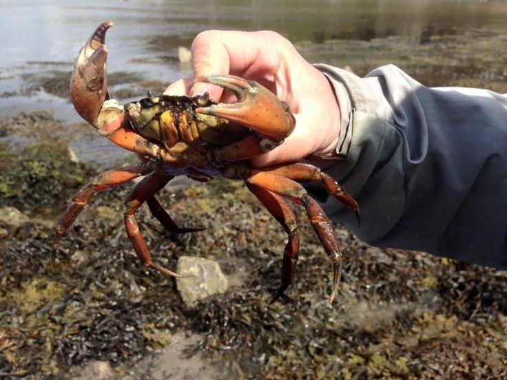 Coastal foraging  @Wildwood Bushcraft Slow adventuring in Scotland