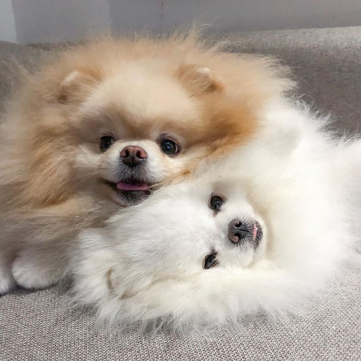 Blessing Your Feed With These Cutiepies Minipet Online Pet Boutique Is A Melbourne Based For Small Dogs Cute Cats And Dogs Pets Most Beautiful Dogs