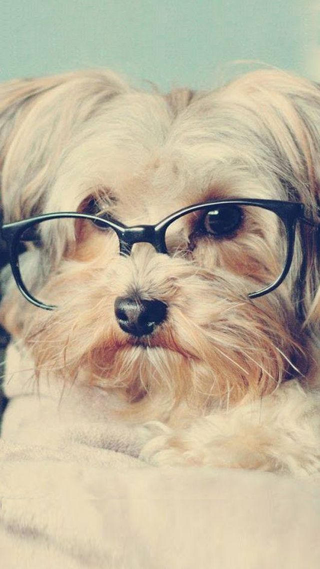 Cute Hipster Iphone Wallpaper Cute Lomo Vintage Pup Iphone Wallpaper Animal Dogs
