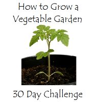 How to Start A Vegetable Garden  -  30 Day Challenge  -  Choosing Soil for Your Container Garden  http://www.streetarticles.com/gardening/how-to-start-a-vegetable-garden-30-day-challenge-choosing-soil-for-your-container-garden: 30 Day Challenge, Outdoor, Plants, Gardens, Vegetables Garden, Vegetable Garden