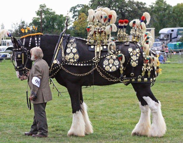 Cornish Draft Horse Tack Braymere Custom Saddlery Tack