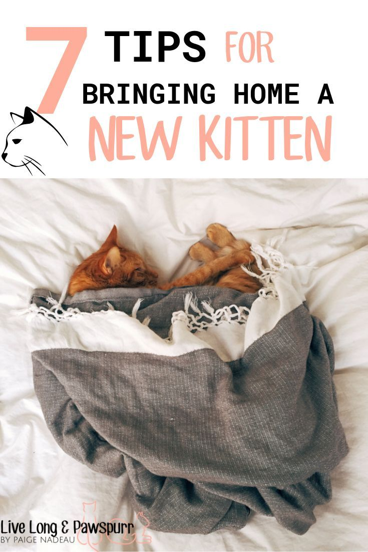 7 Helpful Tips For Introducing A New Kitten To Your Home Live Long And Pawspurr Kitten Care Cat Care Tips Bringing Home A Kitten