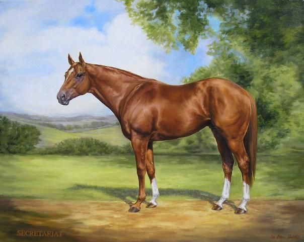 "Secretariat inherited the ""large heart"" gene through his dam's line. His heart was about 3X larger than average! Super Horse!"