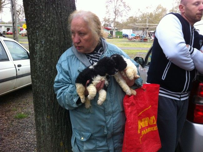 Cuccioli in vendita a Pecs