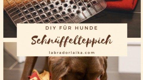 Diy Schnuffelteppich Fur Hunde Midoggy Community In 2020 Fussmatte Selbst Gestalten Schnuffelteppich Schnuffelteppich Hund