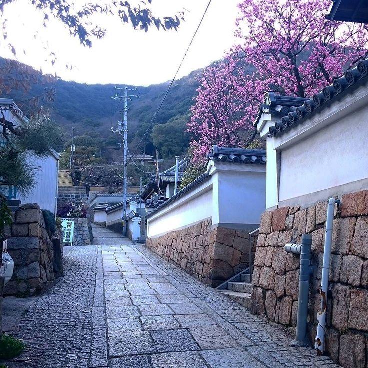 """おはようございます 今朝は鞆潮まち軽トラ市に参加してます粟村です 写真は明円寺前の路地です このまま登ってくと医王寺ですよ 紅梅のピンク色がイイ感じです 鞆の浦の桜はもう少しですね(o;) 軽トラ市は11時30分までやってます """"おでん""""を用意して待ってますよー #鞆の浦 #鞆 #鞆潮まち軽トラ市 #梅 #紅梅 #明円寺 #鞆の浦路地シリーズ #路地 #tomonoura #tomo #fukuyama #japan #ume by amochinmi_awamura"""