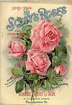 Vintage rose catalogue