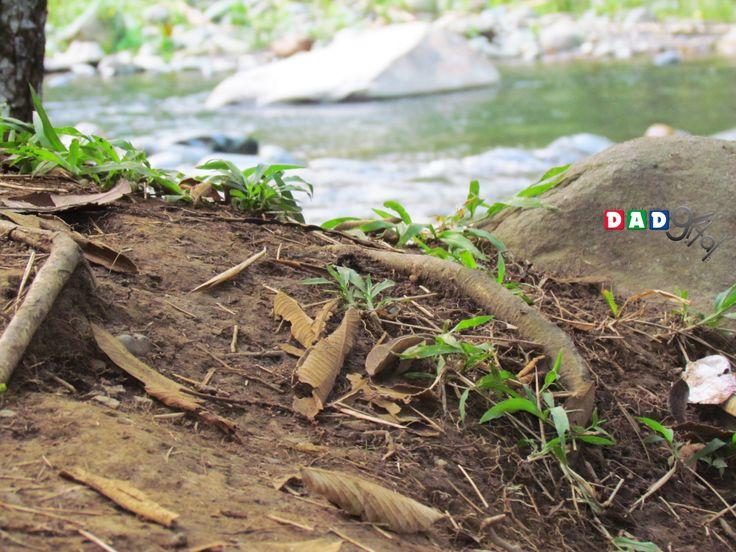 Orilla del río Pance