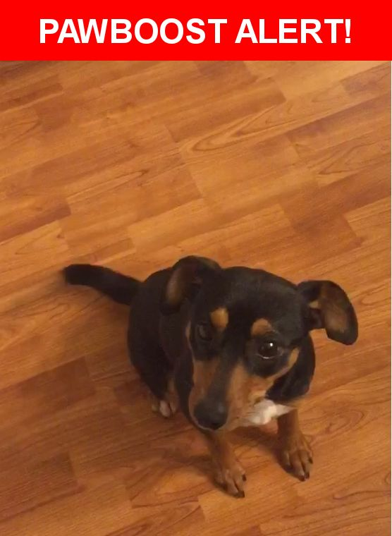 Please spread the word! Daisy was last seen in Des Moines, IA 50315.  Description: Sweet Mini. doberman pinscher, is not microchipped, she is greatly missed.  Nearest Address: South Des Moines