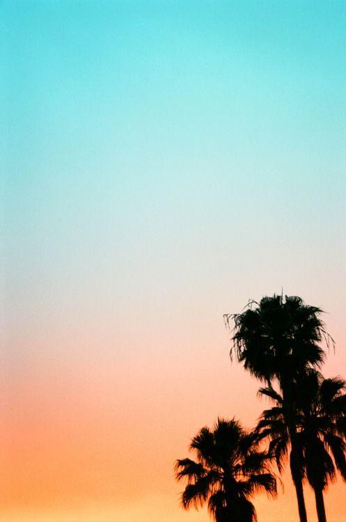 Palm Sky Rainbow Sunset Pastel Sunset Palm Trees Wallpaper