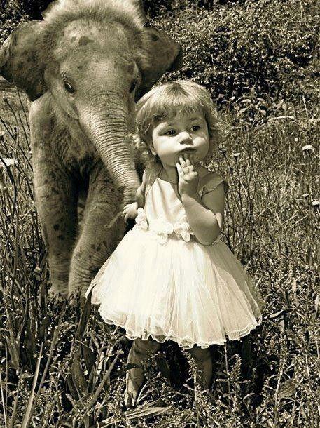 """#memobaby """"Ben quoi, j'promène mon éléphant en trompe. Comme tous les matins. Le chien et la laisse, c'est d'un banal !"""""""