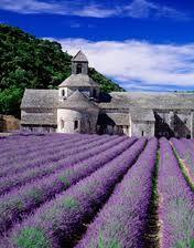Afbeeldingsresultaat voor lavendelvelden frankrijk