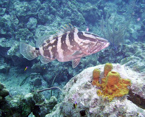 Best 25+ Marine biologist salary ideas on Pinterest Marine - environmental engineer job description