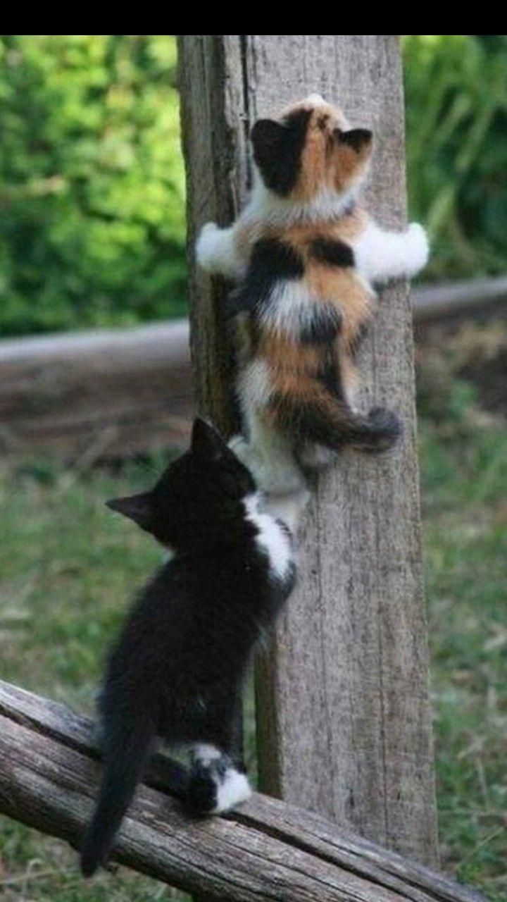 Ene Solizz In 2020 Kittens Cutest Kittens Cute Animals