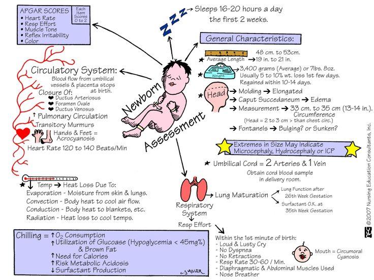 newborn mnemonics | ... neonate newborn mnemonic memory notebook nursing school student nurse