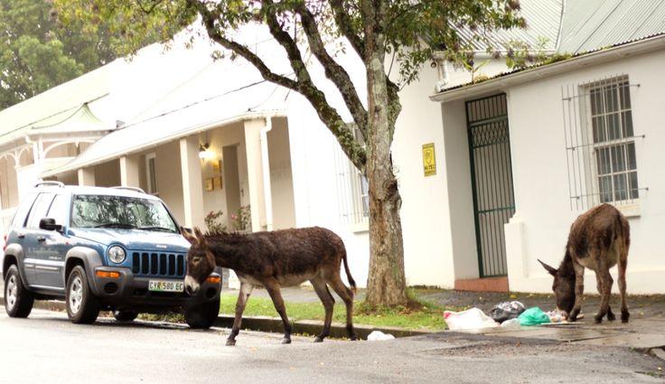 Donkeys on Donkin Street