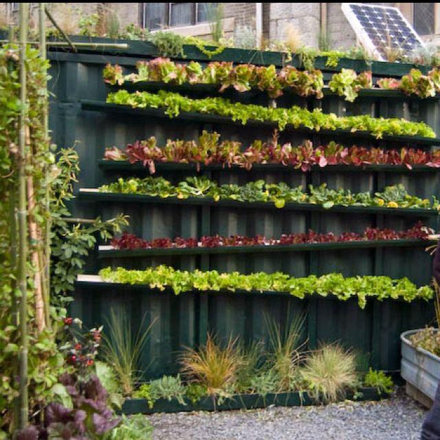 Vertical garden urban art
