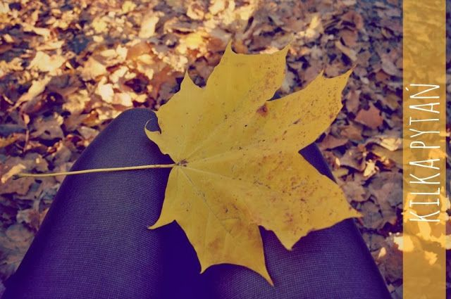 Sukces | 10 ważnych pytań do Ciebie (od Ciebie) | w sam raz na te chłodne dni