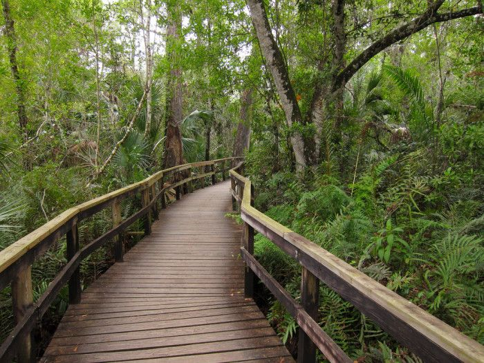 16 Out Of This World Hiking Spots In Florida | 12. Fakahatchee Strand Preserve State Park