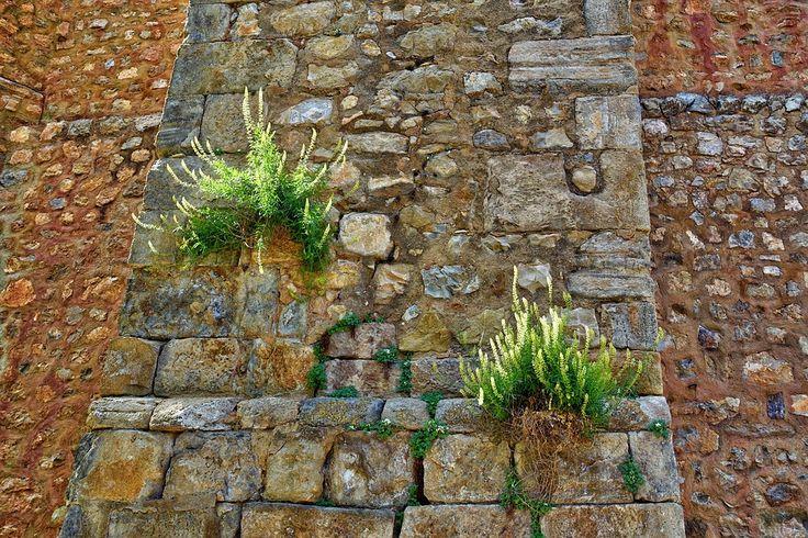 Une astuce naturelle imparable contre les mauvaises herbesnoté 3 - 271 votes Ahhh, les mauvaises herbes ! Elles ont la fâcheuse tendance de pousser partout et surtout là où on ne les attend pas. Le plus embêtant, c'est sans nul doute lorsqu'elles pointent le bout de leur nez entre les dalles de béton ou dans …