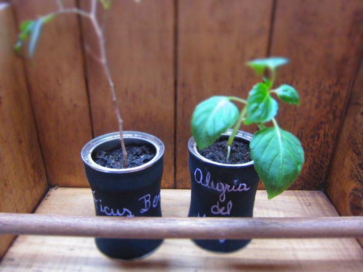 Plantas de interior en maceteros reciclados