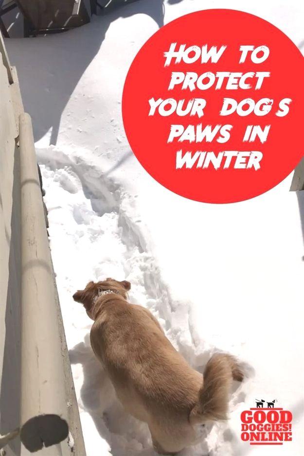 Dog Training Jute Dog Training 06066 Dog Whisperer Pitbull