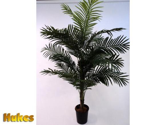best 25 indoor palms ideas on pinterest tropical house plants big indoor plants and palm. Black Bedroom Furniture Sets. Home Design Ideas