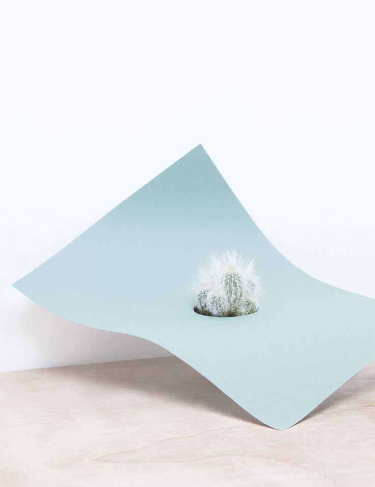 martina-lang-paperplant-series-4