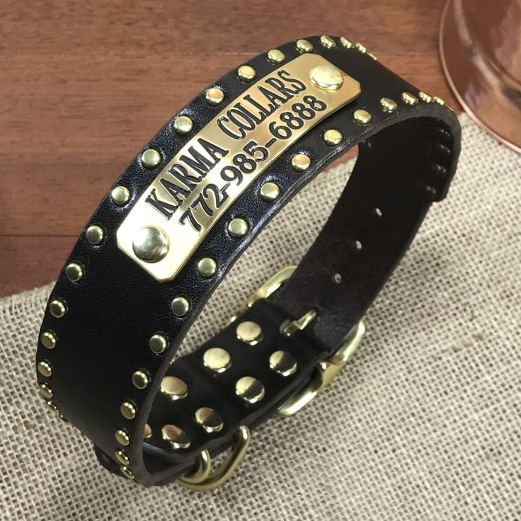 15 wide studded leather dog collar with nameplate in