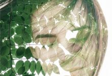 La albahaca tiene muchas propiedades medicinales. Las hojas sirven como un tónico para los nervios y agudizan la memoria. Promueven la eliminación de la mat