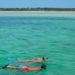 Snorkelers glide through Key West's cozy waters, mingling with tropical fish and sea creatures.