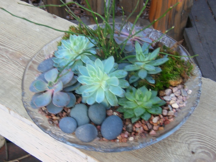 102 best images about Hip House Plants on Pinterest ...