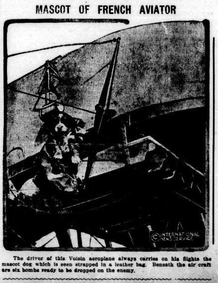 This little dog was the mascot of a French aviator during World War I. Picture from the Lakeland Evening Telegram August 12, 1915.