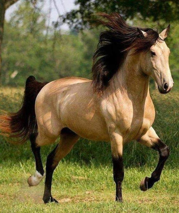 caballo big and beautiful singles Join rewards and earn points when you explore and search on msn sign in  celeb couples with big age differences  meet singles edit remove section .