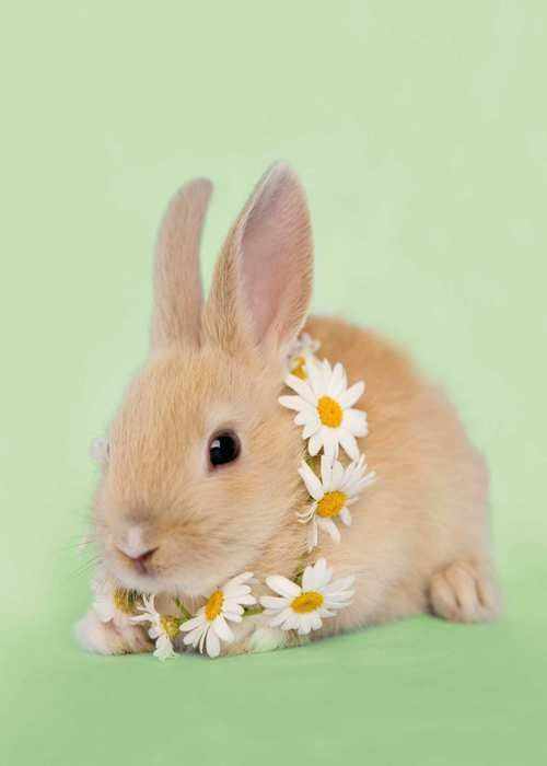 Bunny wearing daisies ... All Things Shabby and Beautiful