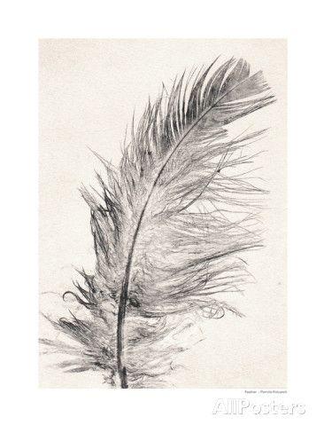 Feather - Pernille Folcarelli (allposters.se)