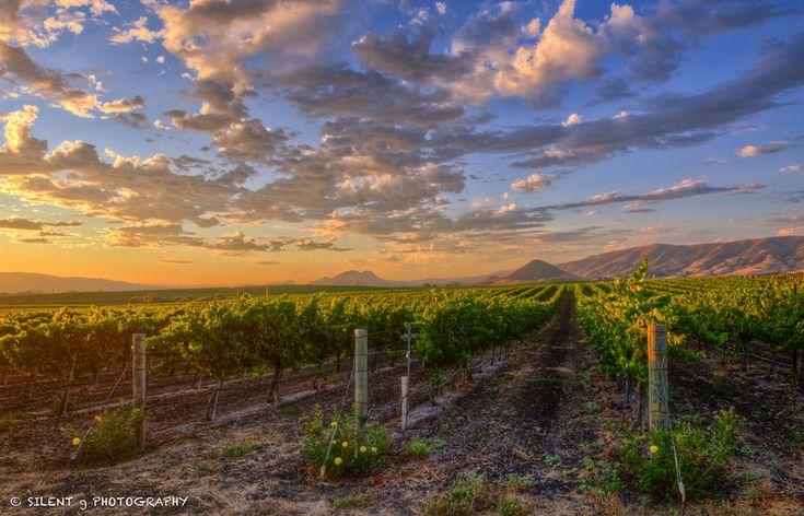 Edna Valley vineyards ... Edna Valley, San Luis Obispo Co., California: Favorite Places, California Dreamin, Valley Wineries, San Luis Obispo Wineries, Happy Places, Edna Valley, Valley Vineyard, Central Coast, Photo