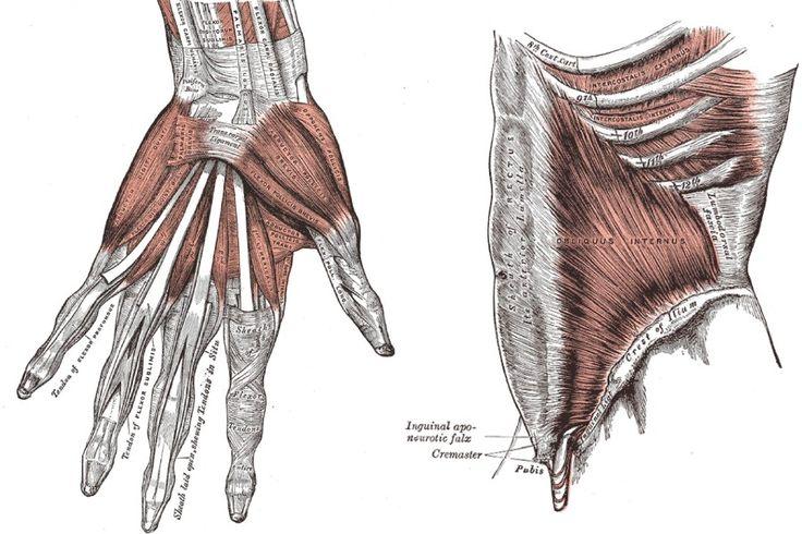 Der Körper ist von einem Netzwerk von Faszien durchzogen: Bewegungsmangel und Verletzungen können diese Fasern schädigen. Die Folgen sind oft Gelenk- und Rückenschmerzen. Was dagegen hilft.