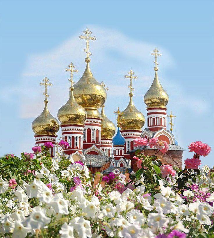 Красивые цветы фото герберы купить пишите