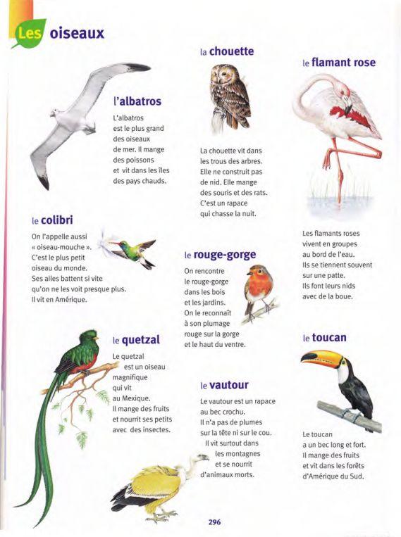 oiseaux / Larousse des Maternelles