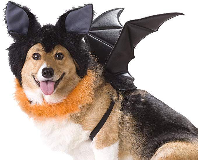 Bat Dog Costume Dog Bat Costume Dogs Pet Halloween Costumes