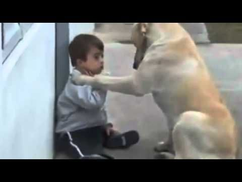 LOVE!!! Sweet Mama Dog Interacting with a Beautiful Child (This dog has more humanity than most humans)  Watch diz frnzz..