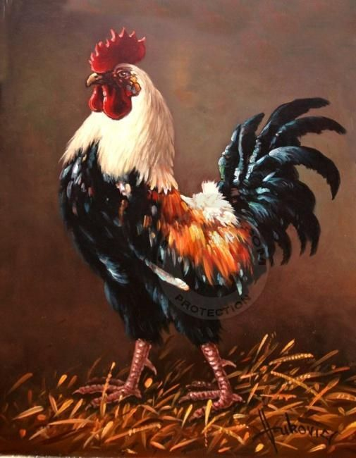 rooster - the master of the yard